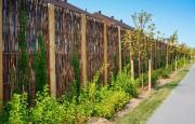 Pour les clôtures, les tiges de saule vêtues... (PHOTO FOURNIE PAR LES ÉCRANS VERTS) - image 1.1