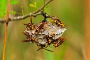 Détruire les nids alors qu'ils sont encore petits... (Photo Thinkstock) - image 1.1