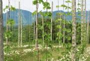 À la Ferme brassicole des Cantons,poussent 1 million... (photo fournie par Jonathan Grant, ferme brassicole) - image 1.0