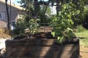 Samuel Toad Lemieux a fabriqué un jardin surélevé... (Courtoisie) - image 1.0