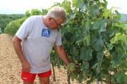 Les vignerons de Cahors ne sont autorisés qu'à... (Photo Karyne Duplessis Piché, collaboration spéciale) - image 2.0