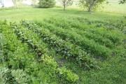 Plutôt qu'un jardin conventionnel, il propose un jardin... (Photo Le Quotidien, Gimmy Desbiens) - image 3.0