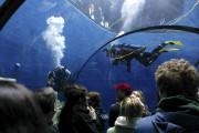 L'Aquarium de Québec... (Photothèque Le Soleil) - image 7.0