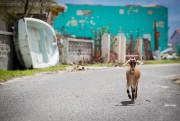 Les conditions sanitaires dans l'île deBarbuda inquiètent les... (PHOTO SIMON GIROUX, LA PRESSE) - image 1.0