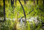 De nombreuses espèces d'oiseaux ont élu domicile dans... (PHOTO SIMON GIROUX, LA PRESSE) - image 2.0