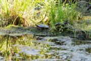 Une tortue se laisse regarder.... (PHOTO SIMON GIROUX, LA PRESSE) - image 3.0
