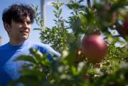 Beaucoup de gens aiment les pommes, qu'ils... (Photo Olivier Jean, La Presse) - image 2.0