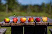 Six pommes cueillies au verger Maniadakis: la McIntosh,... (Photo Olivier Jean, La Presse) - image 3.0