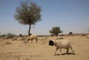 Des troupeaux de moutons gambadent parfois dans le... (PHOTO SYLVAIN SARRAZIN, LA PRESSE) - image 1.1