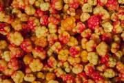 Ce petit fruit venu du Nord endosse les... (PhotoThinkstock) - image 2.0