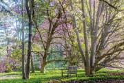 L'arboretum du musée original, à Merion, est toujours... (Photo fournie parla Fondation Barnes) - image 1.1