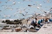 Les mouettes d'Essaouira sont redoutables et n'hésiteront pas... (Photo Edouard Plante-Fréchette, La Presse) - image 2.0