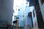 Le coeur de Jodhpur est un dédale bleu... (PHOTO SYLVAIN SARRAZIN, LA PRESSE) - image 4.0