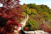 Séoul et Montréal sont comparables à l'automne côté... (Photo Violaine Ballivy, La Presse) - image 4.0
