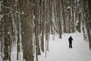 Le parc offre 40km de ski de fond... (Photo David Boily, La Presse) - image 2.0