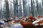 L'automne a beau s'être montré généreux, il faut s'y... (Photo Thinkstock) - image 2.0