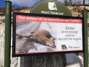 Le nourrissage hivernal favorise les accidents de la... (Photo fournie par la Ville de Mont-Tremblant) - image 1.0