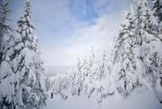 Les arbres couverts de neige prennent l'allure de... (Photo David Boily, La Presse) - image 2.0