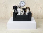 Le canapé-lit pour animaux de la collection Lurvig... (PHOTO FOURNIE PAR IKEA) - image 1.0