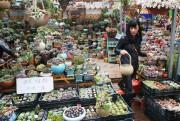 Le marché aux plantes, à côté de celui... (PHOTO SYLVAIN SARRAZIN, LA PRESSE) - image 1.0
