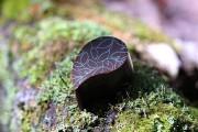 Chocolat forestier de Couleur Chocolat... (Photo tirée de la page Facebook de l'entreprise) - image 1.1