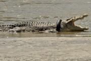 Des défenseurs des animaux pensent que quelqu'un a... (ARFA, AFP) - image 1.0