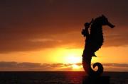 El caballito de mar, sculpture de bronze réalisée... (Photo Samuel Larochelle, collaboration spéciale) - image 2.0