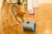 Le robotLaïka est équipé d'une caméra, d'un micro... (Photo fournie par Camtoy) - image 2.0