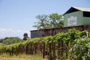 La distillerie Longueteau a été fondée en 1895... (PHOTO DAVID BOILY, LA PRESSE) - image 2.0