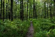 Parcourir l'Appalachian Trail, c'est aussi s'enfoncer dans un... (Photo Marie-Soleil Desautels, La Presse) - image 2.0