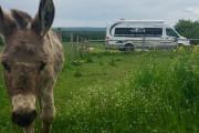 Située à Sainte-Anne-de-Larochelle, l'asinerie Les ânes en culottes... (PHOTO FOURNIE PAR TERROIR EN VR) - image 3.0
