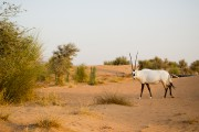 Dès l'entrée à la Dubai Desert Conservation Reserve,... (PHOTO SARAH MONGEAU-BIRKETT, LA PRESSE) - image 1.0
