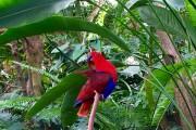 Bloedel Floral Conservatory... (Photo Anne Pélouas, collaboration spéciale) - image 5.0