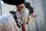 De profondes traces de morsures dans la peau... (Photo Patrick Sanfaçon, La Presse) - image 1.0