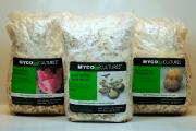 Le chercheur David Dussault possède une... (Crédit photo : Mycocultures inc) - image 3.0