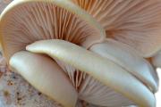 Le chercheur David Dussault possède une champignonnière gourmet... (Crédit photo : Mycocultures inc) - image 1.0