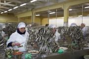 Chez Pinhais, les sardines sont mises en conserve... (Photo Nathaëlle Morissette, La Presse) - image 3.0