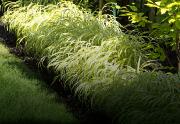 Vous gardez en souvenir ce magnifique jardin d'Andalousie avec ses murs blancs... - image 2.0