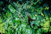 Le mur végétal est entièrement comestible.... (PHOTO EDOUARD PLANTE-FRÉCHETTE, LA PRESSE) - image 3.0