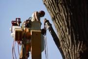 Les élagueurs qui sont formés pour travailler près... (PHOTO FOURNIE PAR éMONDAGE ST-GERMAIN) - image 2.0