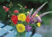 «Des fleurs, des plantes, j'aime toujours en recevoir,... (Photo Thinkstock) - image 1.0