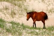 Les chevaux mustang espagnols ont disparu... (Photo Bernard Brault, La Presse) - image 2.0