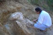 Le paléontologiste Pascal Tassy devantle crâne «quasiment intact»... (Musée d'Histoire naturelle de Toulouse VIA AFP) - image 1.0