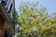 Certains ne voudraient pas d'un cerisier parce qu'il... (PHOTO ALAIN ROBERGE, LA PRESSE) - image 1.0