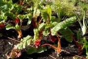 Lepotager offre une belle variété.... (Photo Martin Chamberland, La Presse) - image 1.0