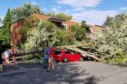 Un arbre est tombé et à causé des... (Photo courtoisie) - image 1.0