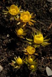 L'iris hollandais... (photo pierre mccan, archives la presse) - image 2.0