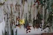 Laurie Anne choisit des fleurs suffisamment épanouies pour... (Photo Martin Chamberland, La Presse) - image 3.0