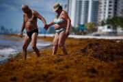 La Floride a reçu des algues rouges sur... (Photo Brynn Anderson, Associated Press) - image 2.0