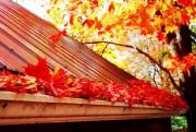 À la fin de l'automne, il est très... (Photo Thinkstock) - image 3.0
